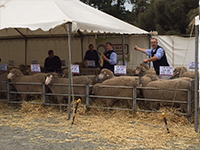 2015 –  Quality Wools Simon Seppelt auctioneering at the 2015 Rices Creek on-property sale at 'Springbank' Saddleworth.