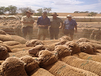 Jim & James Vandeleur pictured classing ewe hoggets at Paul Michael and Tim Doering,