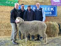2017 Sale Topper - Rices Creek Merino Ram Sale