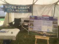 Rices Creek Poll Merinos Display