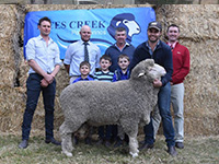 2018 Tintinara Rices Creek Poll Merinos Sale Topper