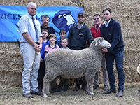 2019 Tintinara Sale Topper - Rices Creek Poll Merinos