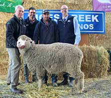Rices Creek Merino Ram Sale - Sale Topper Mid North 2017